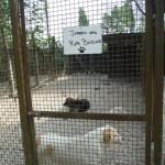Einzelspende Hund 1