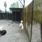 Hund mit Kies 4