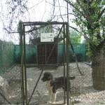 Einzelspende Hund 2