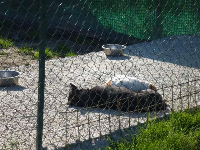 Hunde in der Sonne