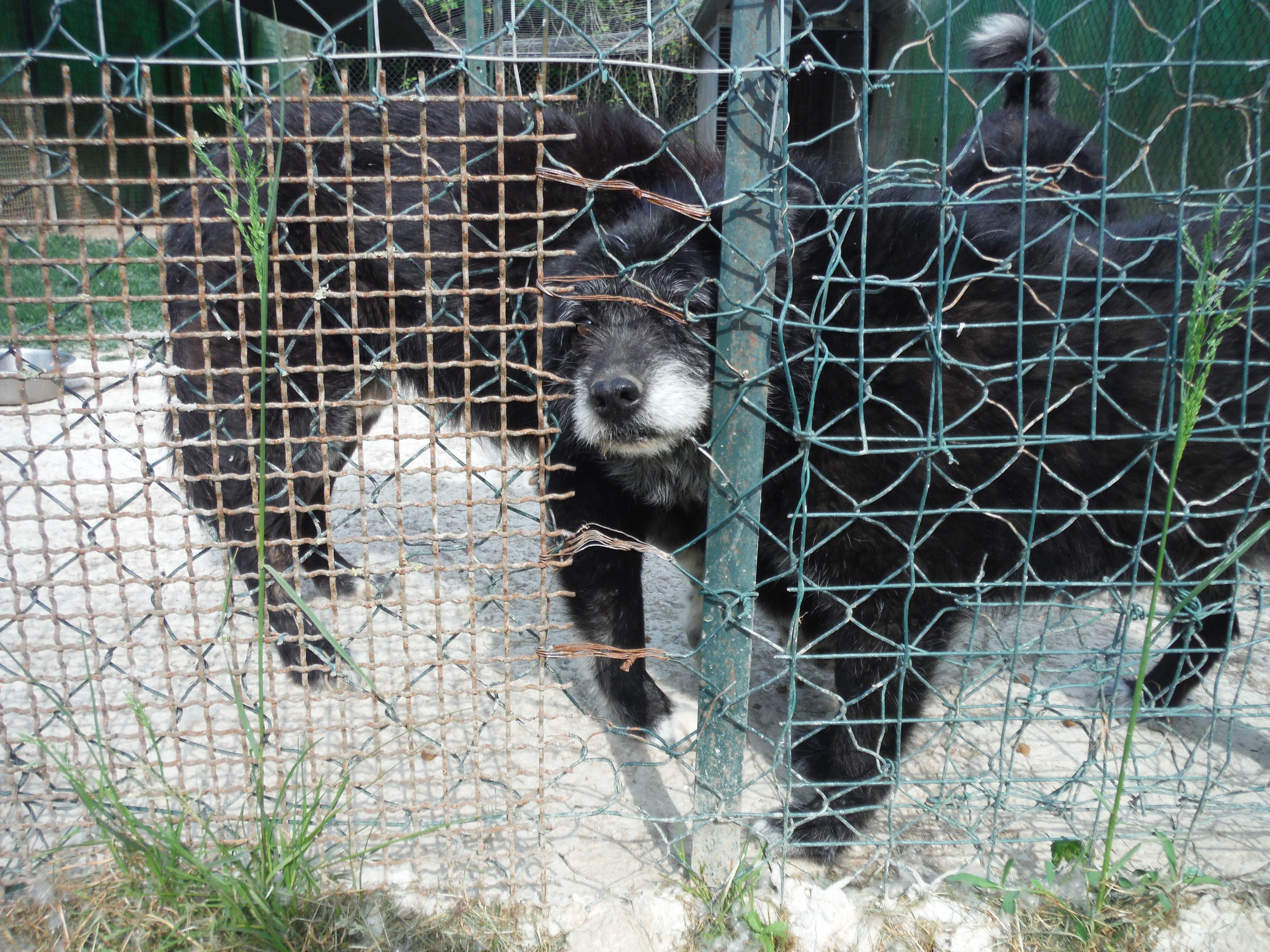 Hund am Zaun