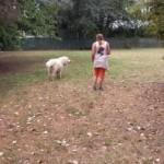 Auslauf Hund