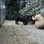 Hund Montefranco 3