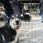Hund Montefranco 2
