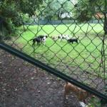 Hunde Auslauf 3