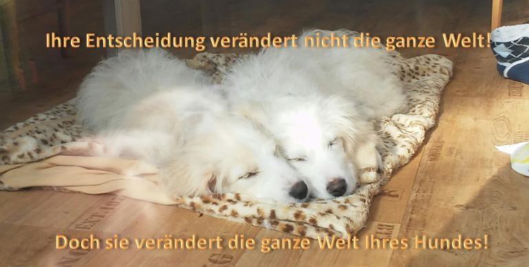 Adoptionshunde