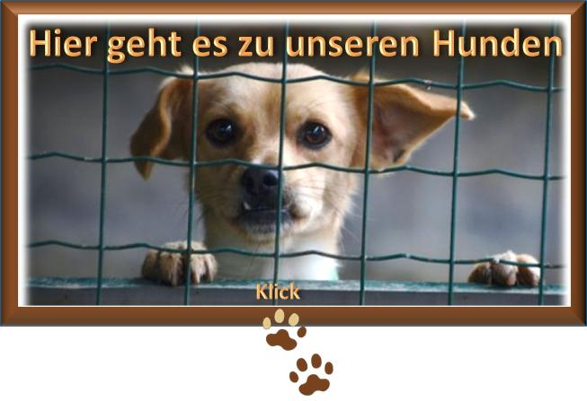 zudenhunden2015.11.24