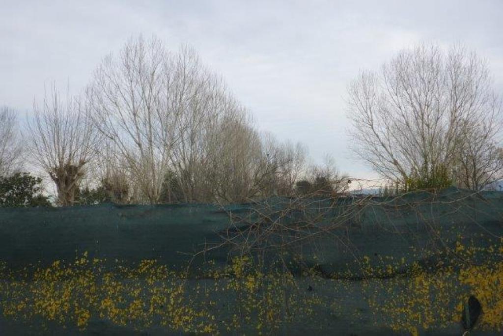 Bäume-vorher-Jan-17-2