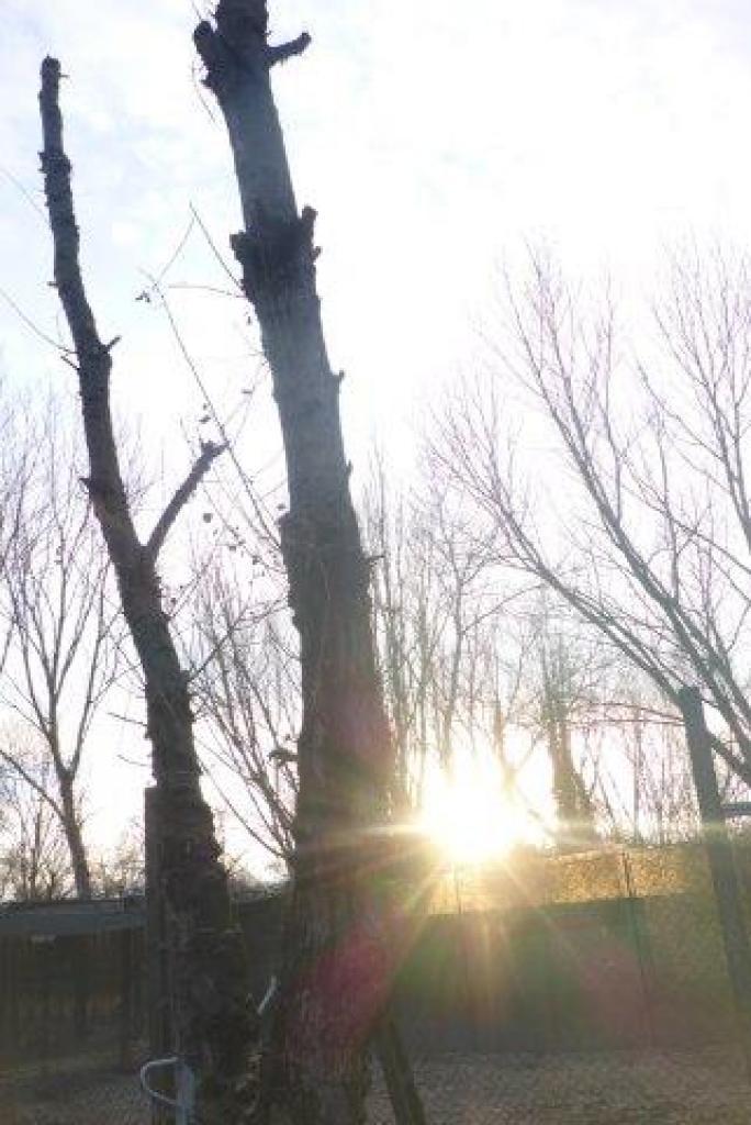Baumschnitt-1.-Tag-Jan-17-11