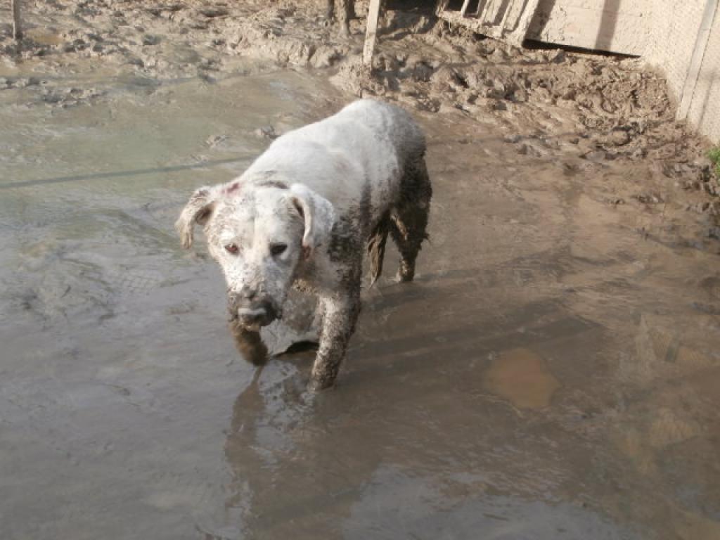 Schlammhunde-1
