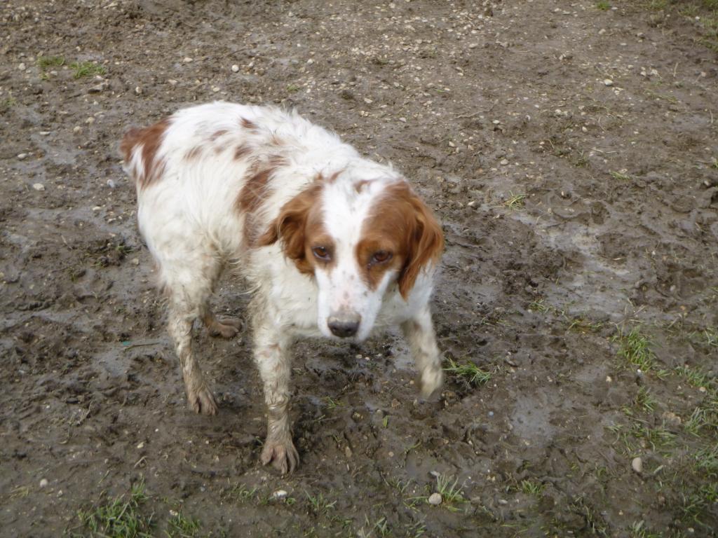 Schlammhunde-Feb18-3