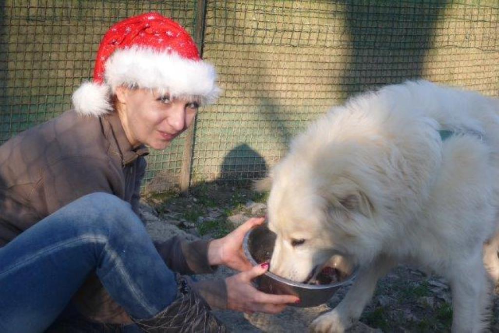 Weihnachtsfest-im-sicheren-Hafen-Dez16-11-1
