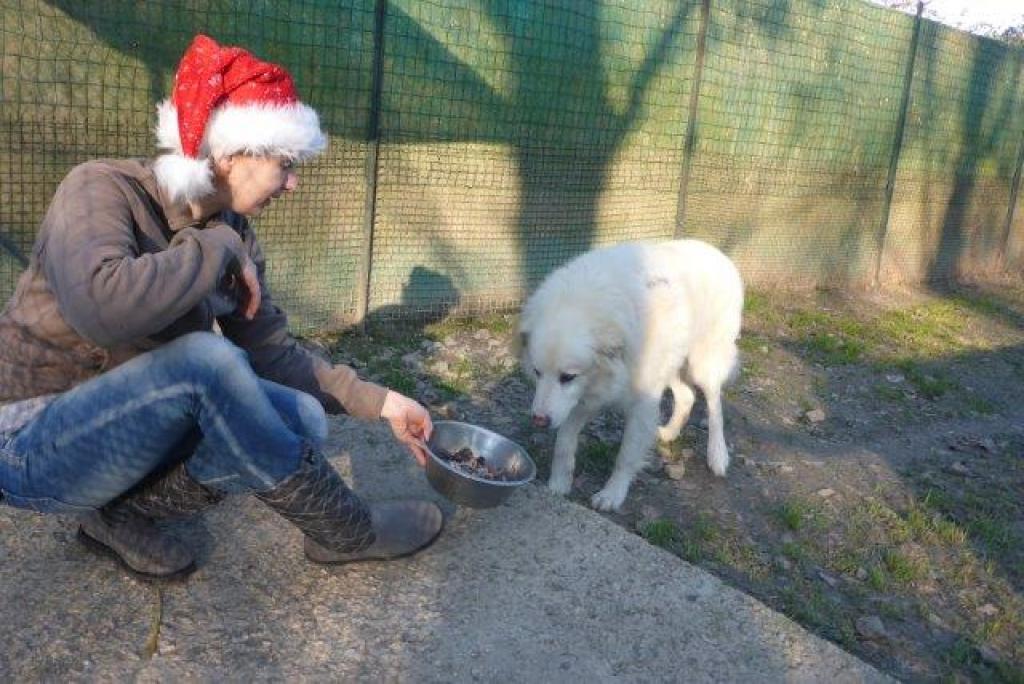 Weihnachtsfest-im-sicheren-Hafen-Dez16-7-1