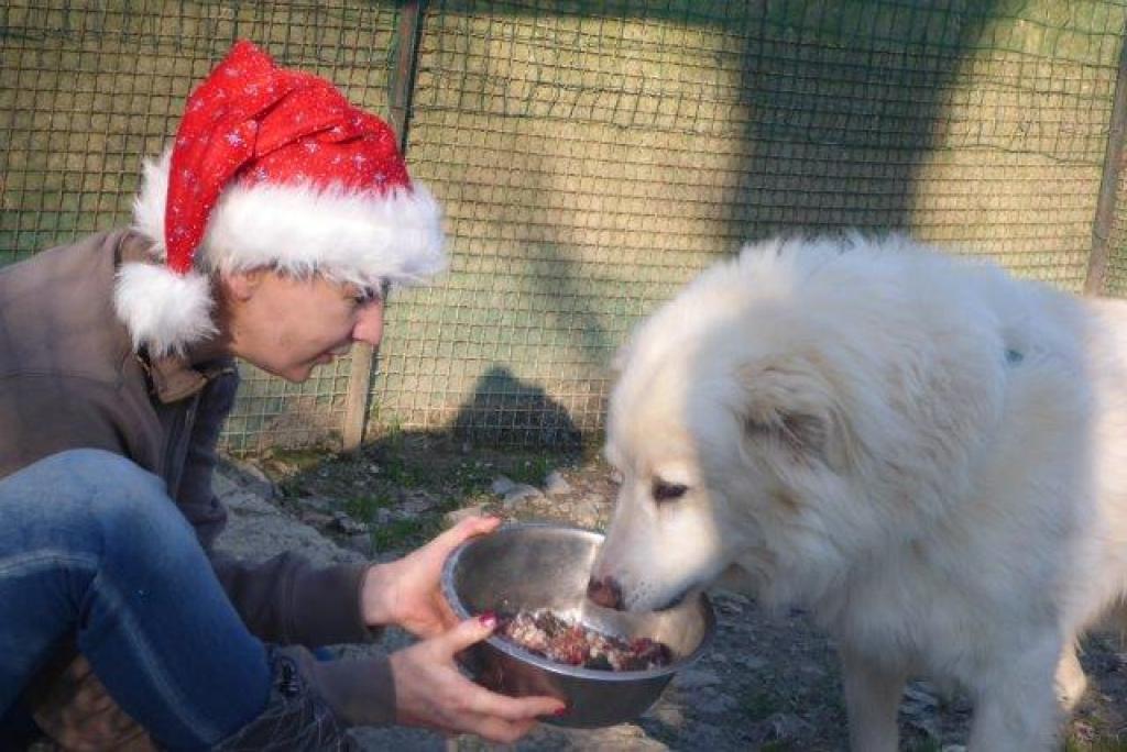 Weihnachtsfest-im-sicheren-Hafen-Dez16-9-1